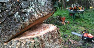 abattre-arbre
