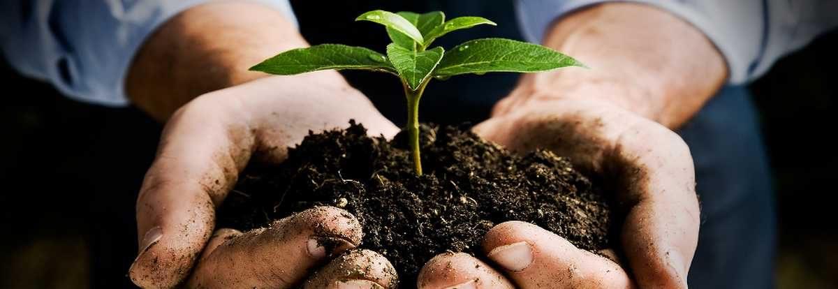 Permalien à: Nos conseils pour être plus écologique